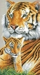 Tender Moment, tiger and cub