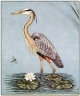 Great Blue Heron, bird