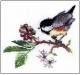 HC568 - Chick Berry by Valerie Pfeiffer - Birds Solo