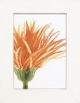 Close Up Orange Flower - (KIT)
