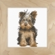 Yorkshire Terrier - (KIT)