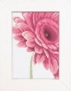 Close Up Pink Flower - (KIT)