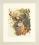 Red Deer - (KIT)