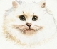 White Persian Cat - #GOK1045 Thae G. KIT