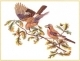Birds On Branch - #GOK2022 Thae G.