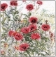 Red Poppies - #GOK2061 Thae G.