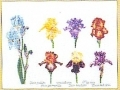 Iris Assortment - #GOK3051 Thae G.