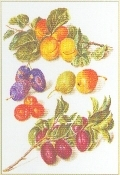 Assortment Of Fruit - #GOK3062 Thae G.