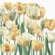 Tulips - #GOK3065 Thae G. KIT