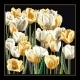Tulips - #GOK3065B Thae G. KIT