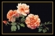Orange Rose - #GOK414B Thae G. KIT