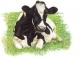 Holstein Cow Looking Forward - #GOK451-L Thae G. KIT