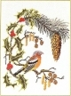 Bird With Holly - #GOK912 Thae G.
