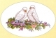 Dove Lovebirds - #GOK922 Thae G.